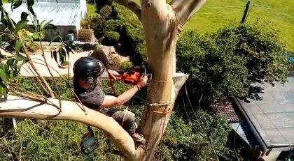 Newquay Tree Surgeon